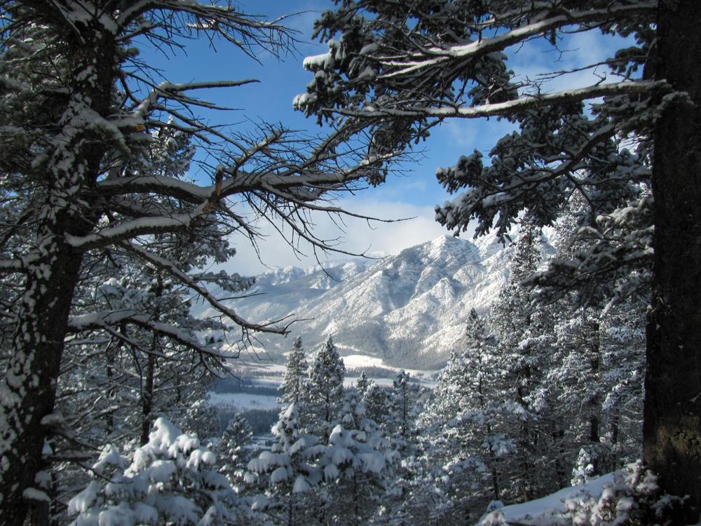 Par une froide journée hivernale où je profitais de la neige fraîche