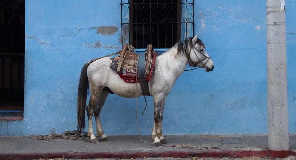 Antigua!