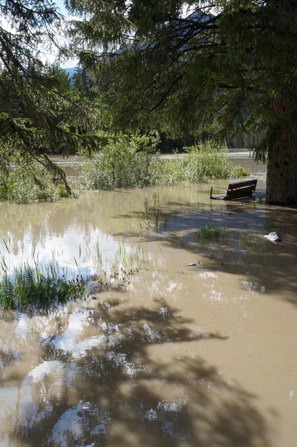 La rivière, normalement verte, devrait s'arrêter du côté gauche des arbustes