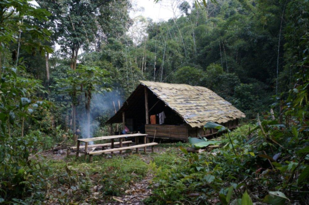 Campement dans le jungle